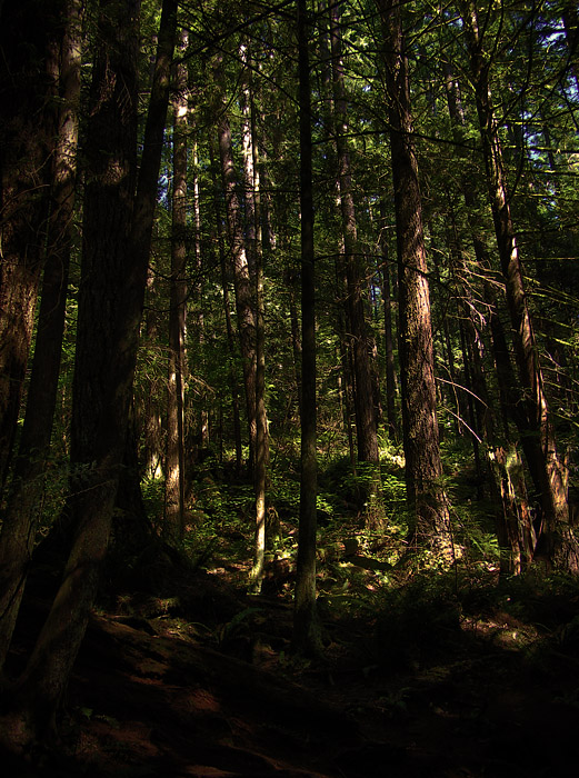 HDR photo of forest at Lynn Canyon on Vancouver's North Shore