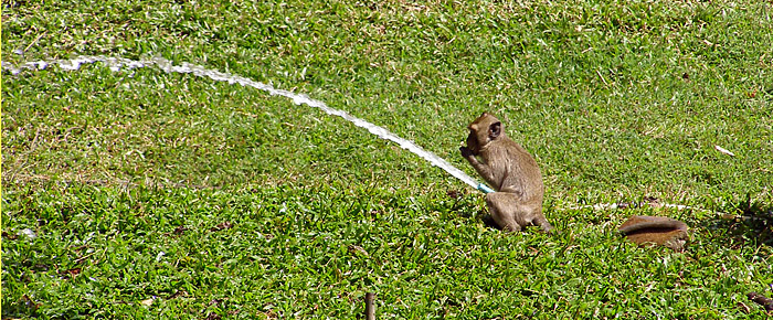 Monkey playing with a hose