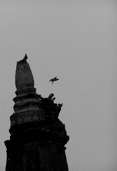 Pigeons on a pillar
