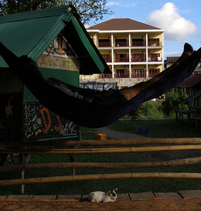 V sleeping in a hammock suspended over a kitten