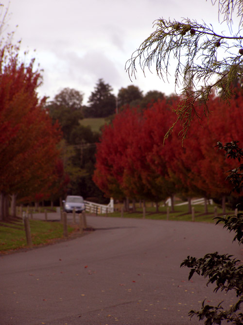 Autumn foliage driveway